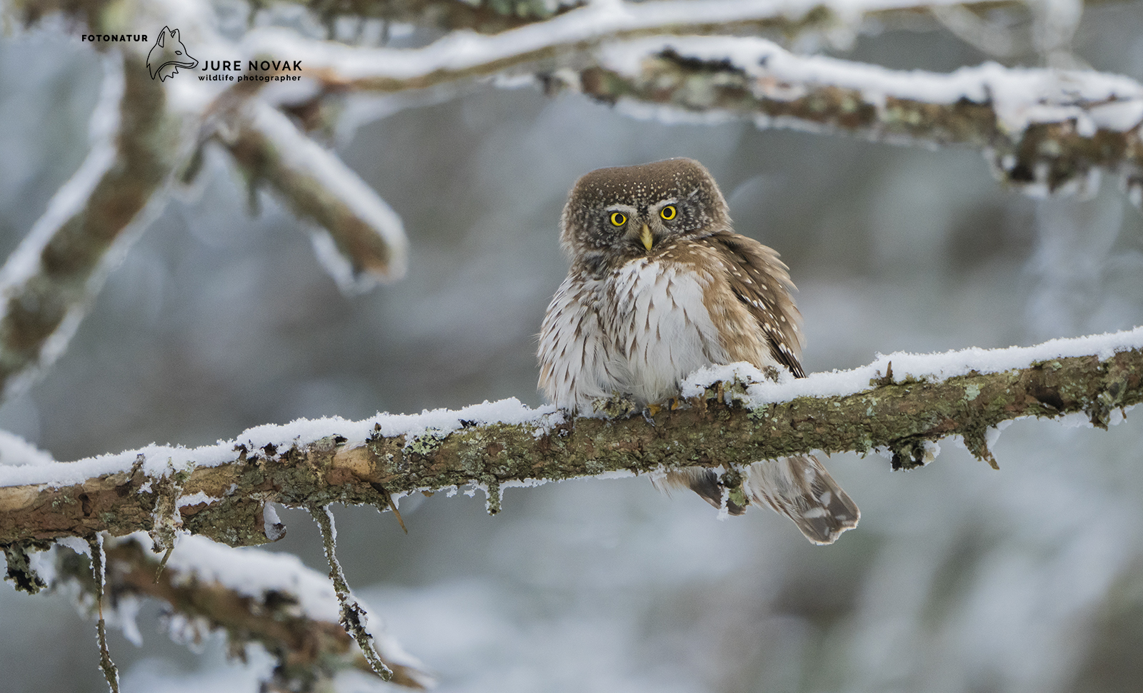 Wildlife photography workshops in Slovenia