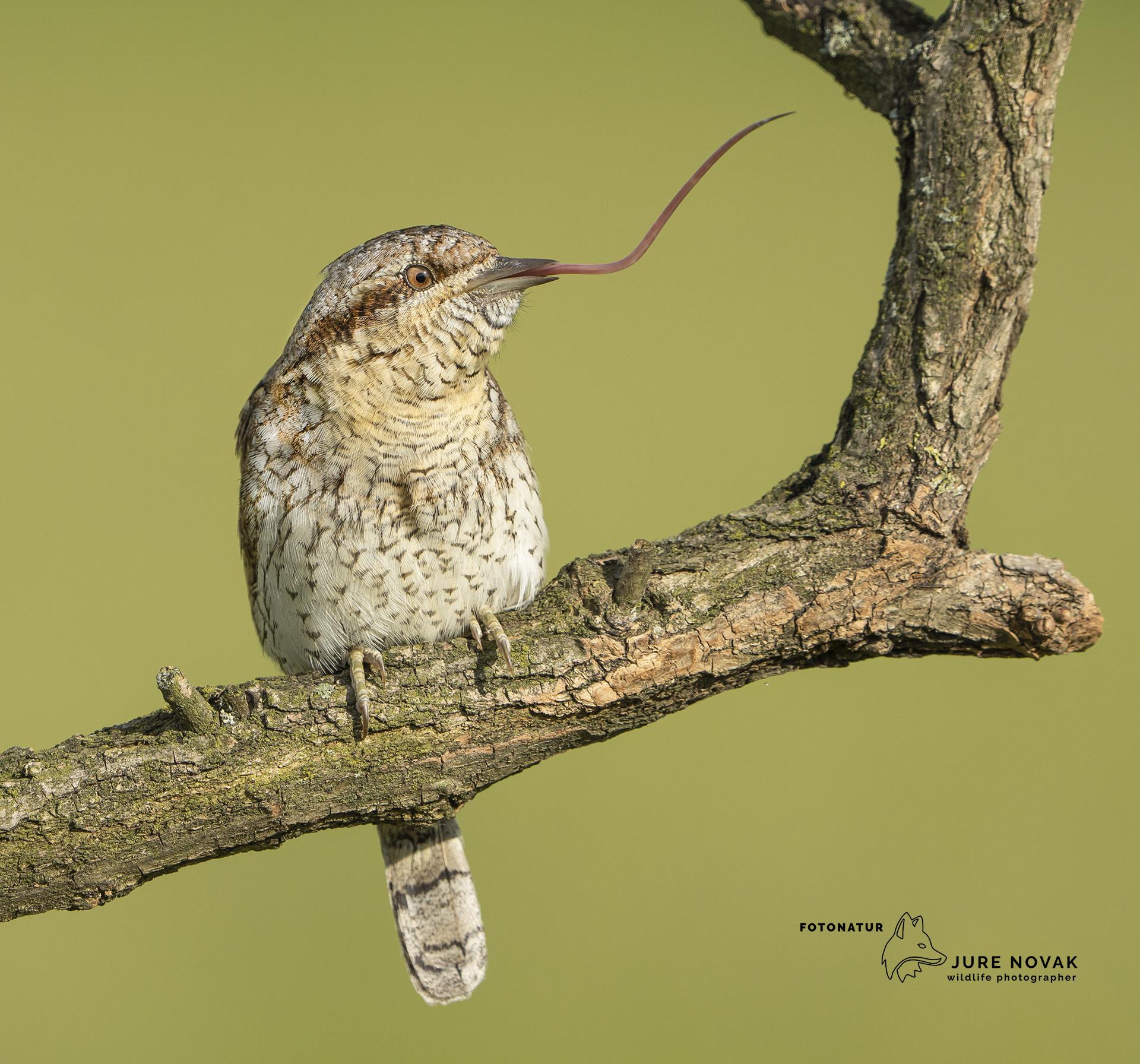 Wildlife photography with Fotonatur