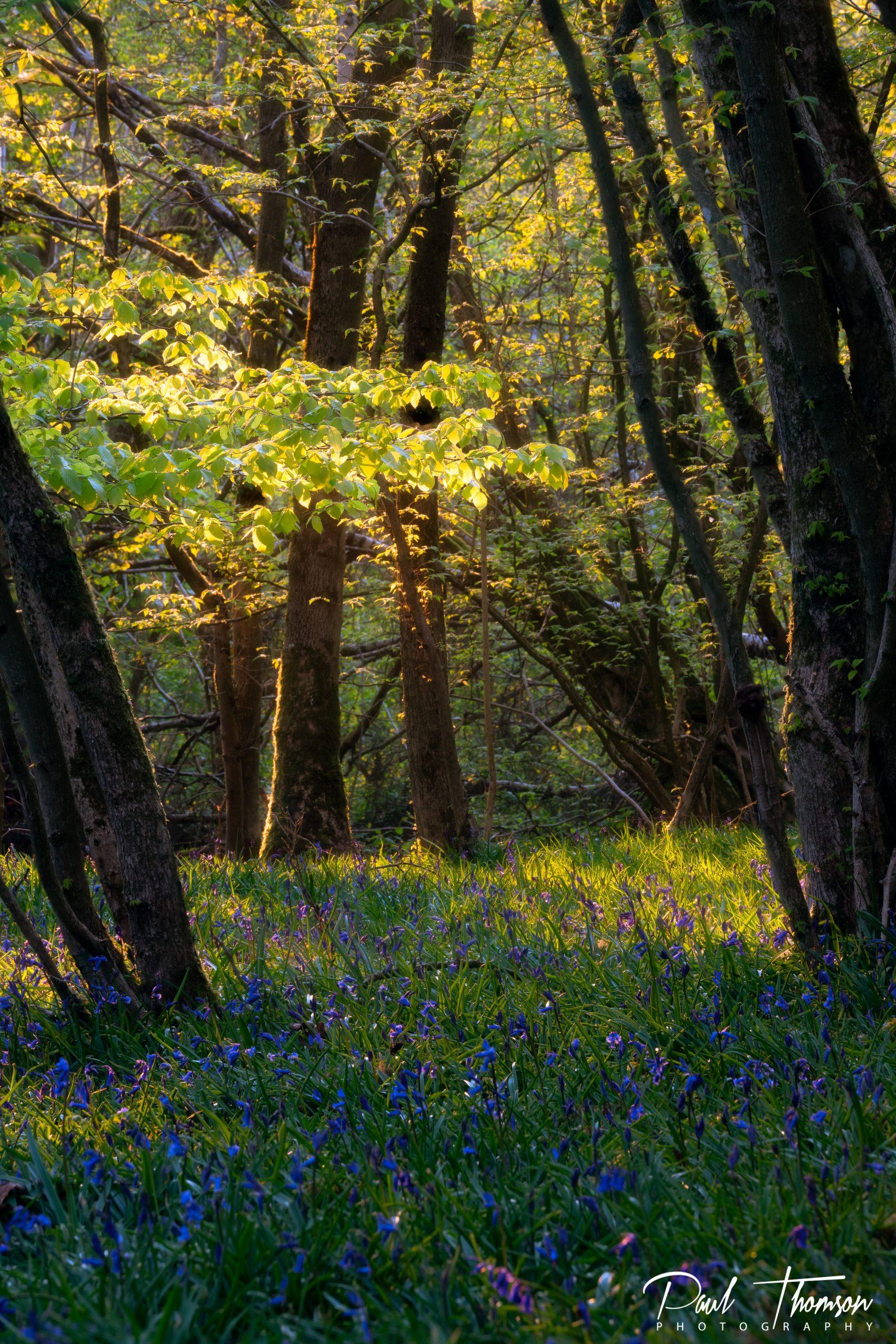Woodlands photography Workshops