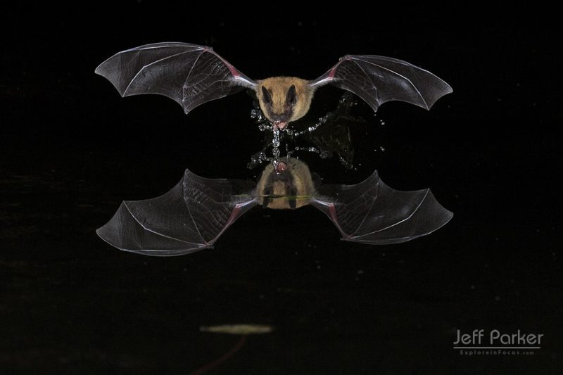Bat and Bird Photography Workshop & Tour