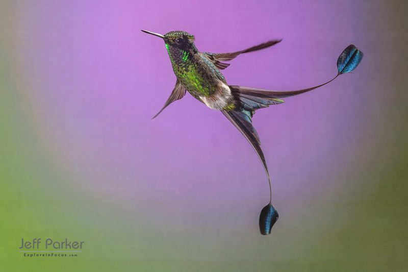 Hummingbird Photography Tour 2022
